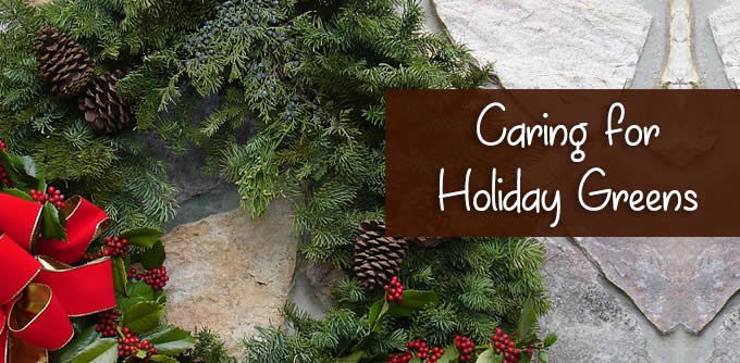caring for holiday greens