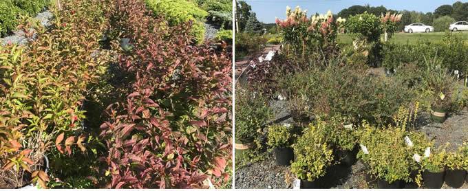 perennials-shrubs.jpg