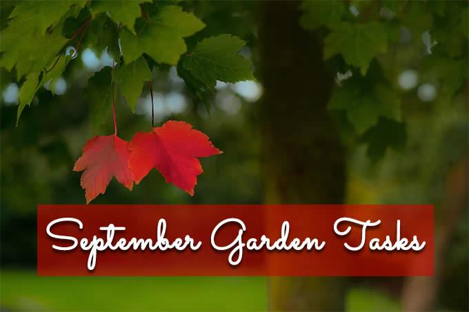 september garden tasks