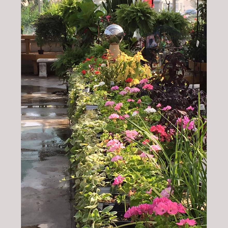 greenhouse-georges-market3